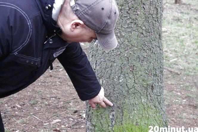 В сквері на Миру, де триває будівництво, таки зріжуть кілька дерев