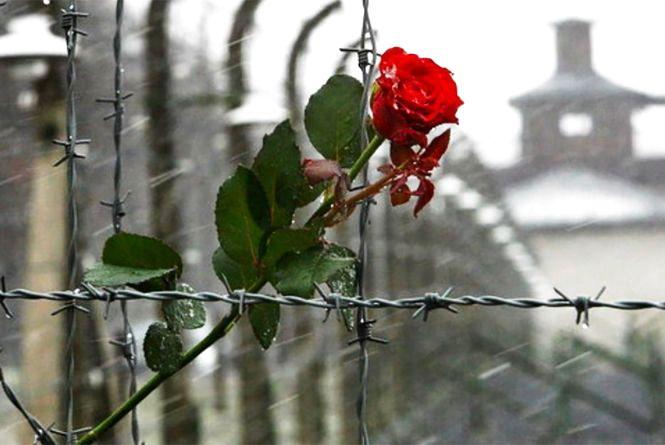 Сьогодні, 11 квітня: Міжнародний день визволення в'язнів фашистських концтаборів та Всесвітній день боротьби з хворобою Паркінсона