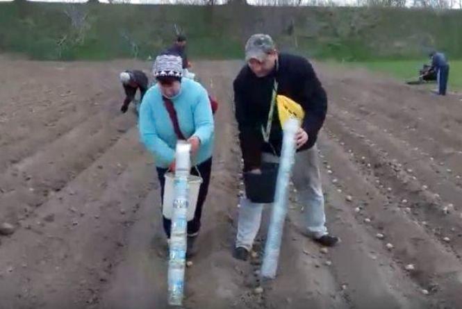 Відео оригінального способу садити картоплю зібрало півмільйона переглядів у соцмережі