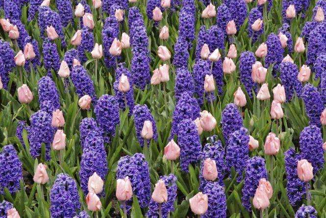 19 квітня буде по-весняному теплим, але хмарним. Погода на сьогодні