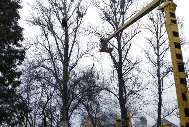 Стали відомі причини падіння з 10-метрової висоти комунальників, які обрізали дерева у Красівці