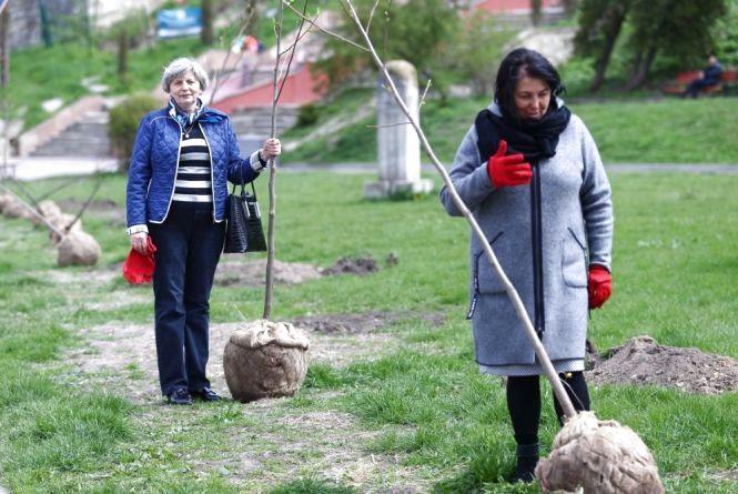 У Тернополі на алеї Героїв висадили унікальні тюльпанові дерева