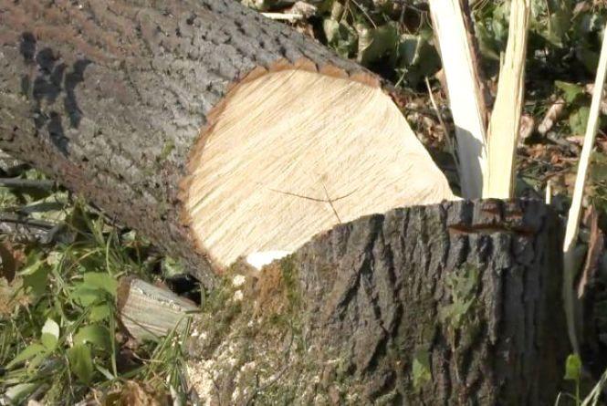 Дерево убило чоловіка, який заготовляв дрова