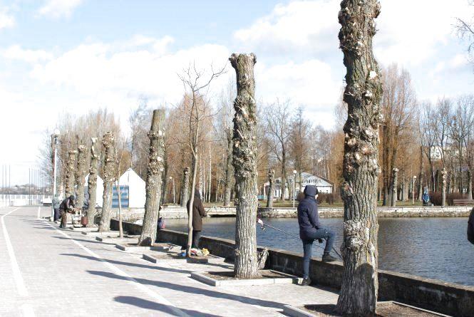 """Тернополянка просить зупинити """"омолодження"""" дерев в Тернополі"""