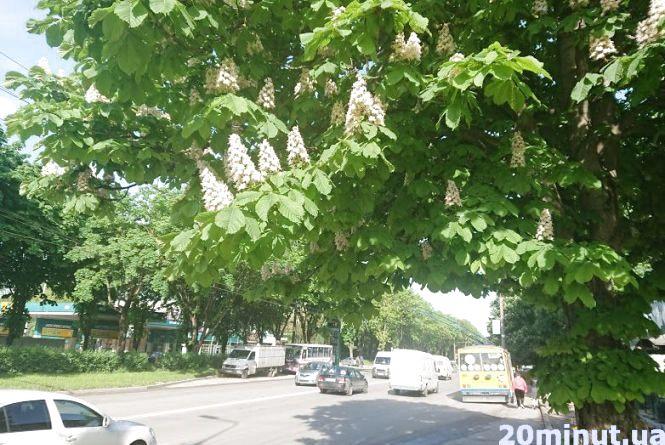 Погода на 23 травня: гроза, град