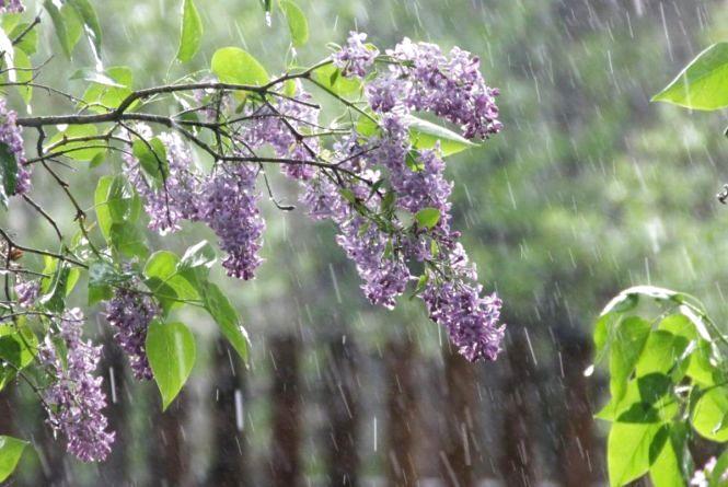 Погода на 25 травня:  дощ з грозою