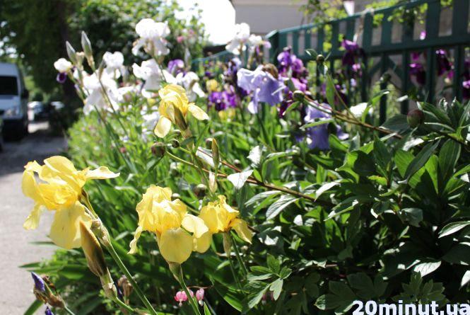 Тернопіль квітне: що садять люди на клумбах та у квітниках (фоторепортаж)