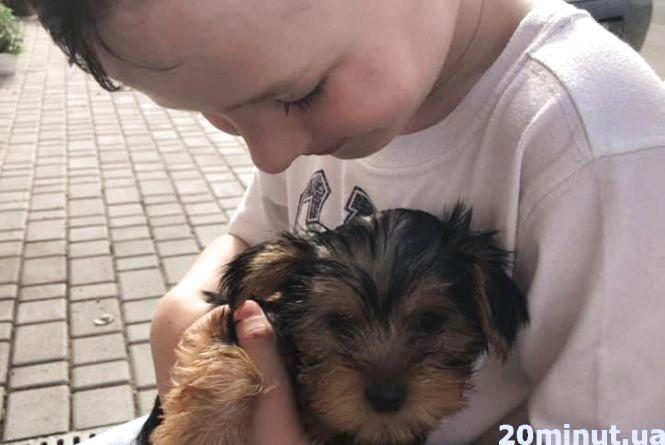 """""""Допоможіть знайти наше маленьке чудо"""": тернополянин обіцяє щедру винагороду тому, хто знайде собачку сина"""