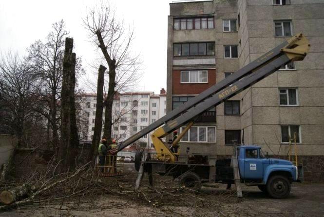 """Чи зупинять """"омолодження"""" дерев у Тернополі: що вирішив виконком"""