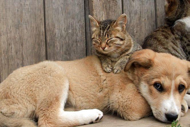 Які правила утримання домашніх та бродячих тварин пропонують тернополяни (опитування)