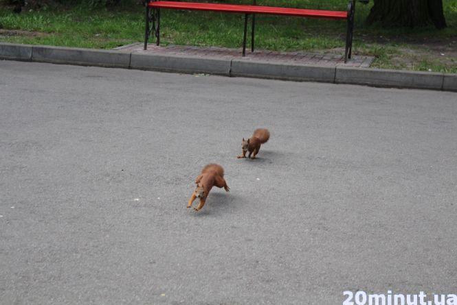 Відео дня: тернополяни фотографуються та підгодовують білок в парку ім. Шевченка