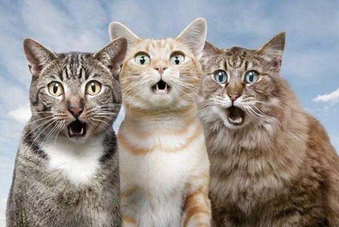 Що робити з сусідськими котами і куди скаржитись, коли всі ігнорують проблему, радить адвокат