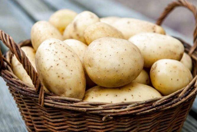 Картопляні льохи за деякий час відійдуть у минуле: експерт