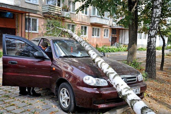 У Тернополі дерево розтрощило припаркований автомобіль: хто заплатить більше тисячі доларів