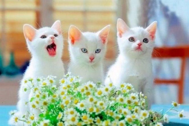 Сьогодні, 1 березня: Міжнародний день котів та Всесвітній день імунітету : 01:03:2019 - te.20minut.ua