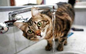 Увага! Цього тижня у Тернополі два дні не буде води