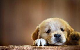 Бути милосердним та відмовитися від хутра: що пропонують тернополяни для захисту тварин (опитування)
