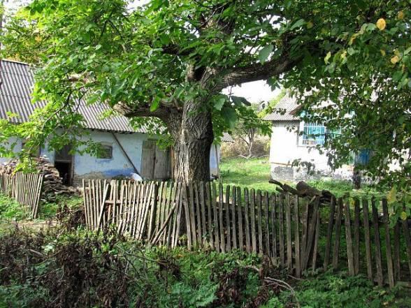 Подвір'я, де народився Василь Івахів